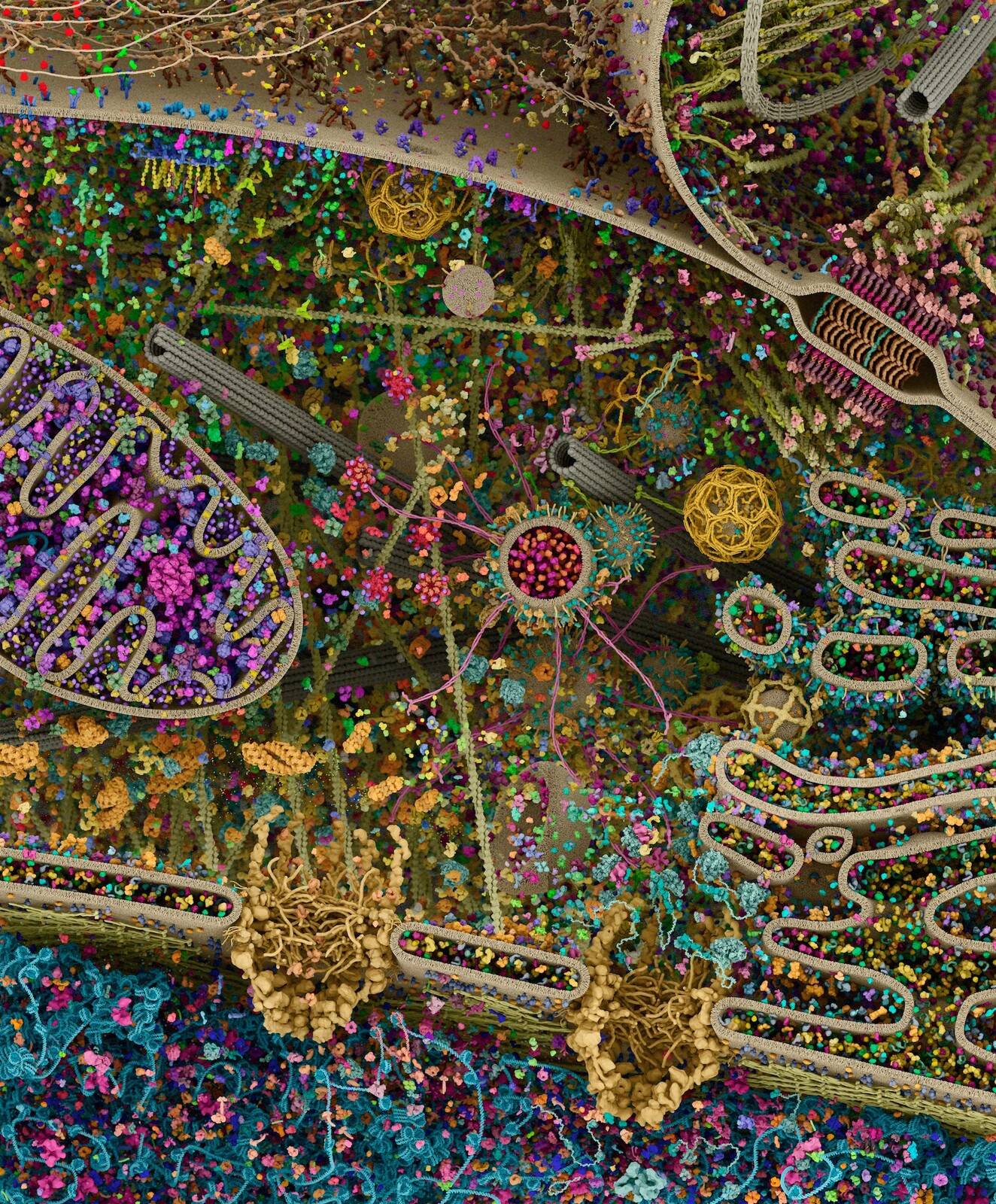Cellular landscape cross-section through a eukaryotic cell, by Evan Ingersoll & Gael McGill - Digizyme's Molecular Maya custom software, Autodesk Maya, and Foundry Modo used to import, model, rig, populate, and render all structural datasets